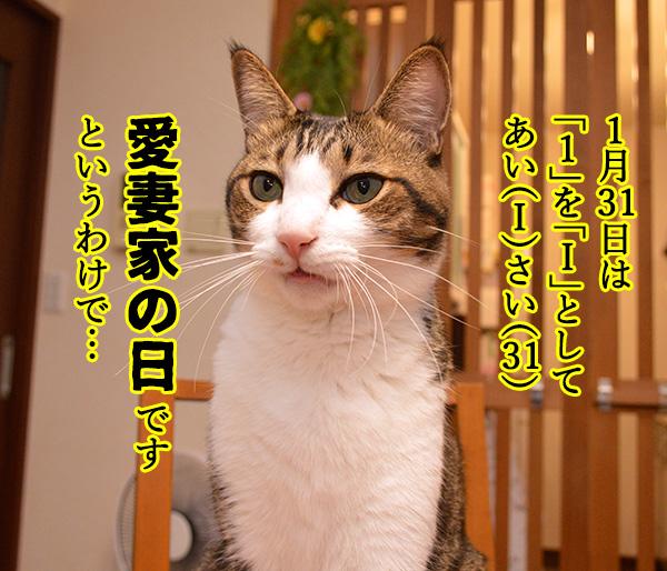 きょうは「愛妻家の日」なんだってッ 猫の写真で4コマ漫画 1コマ目ッ