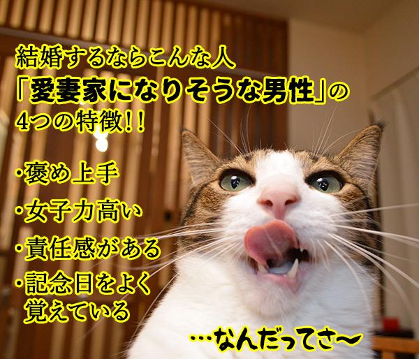 きょうは「愛妻家の日」なんだってッ 猫の写真で4コマ漫画 2コマ目ッ