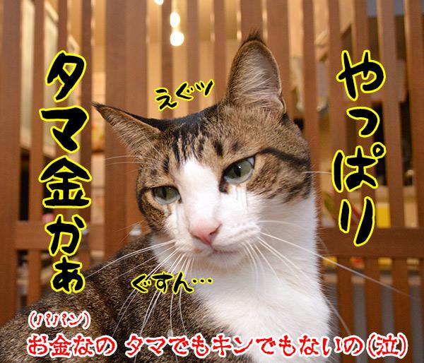 きょうは「愛妻家の日」なんだってッ 猫の写真で4コマ漫画 4コマ目ッ