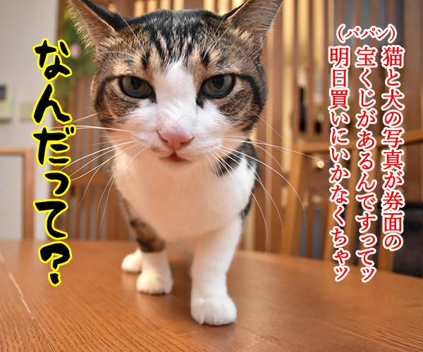 わんにゃわんにゃんスクラッチを買いに行かなくっちゃッ 猫の写真で4コマ漫画 1コマ目ッ