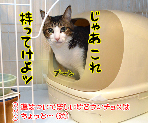 わんにゃんスクラッチを買いに行かなくっちゃッ 猫の写真で4コマ漫画 2コマ目ッ