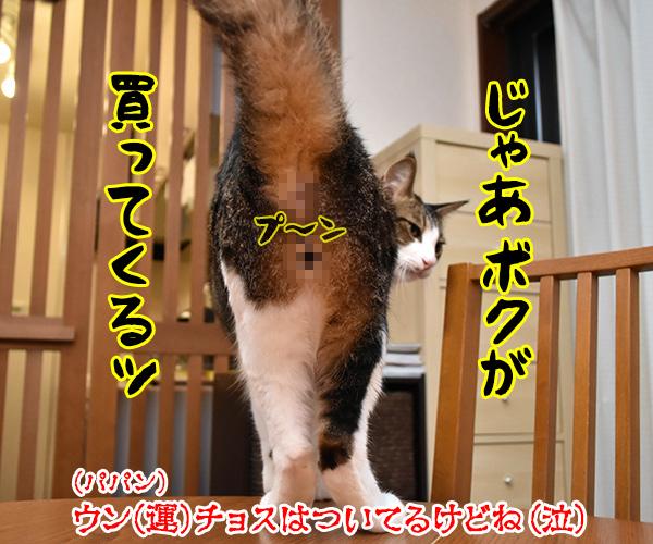 わんにゃんスクラッチを買いに行かなくっちゃッ 猫の写真で4コマ漫画 4コマ目ッ