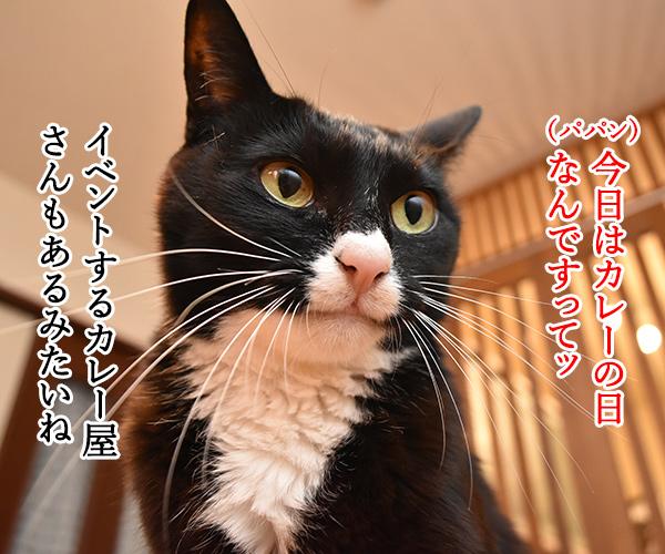 きょうはカレーの日なんだってッ 猫の写真で4コマ漫画 1コマ目ッ