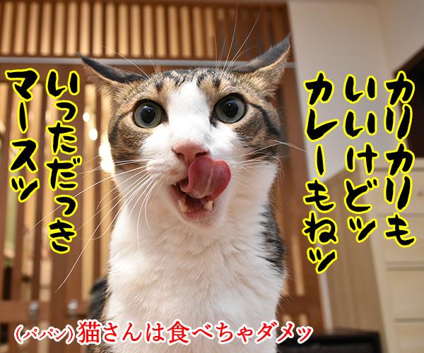 きょうはカレーの日なんだってッ 猫の写真で4コマ漫画 2コマ目ッ