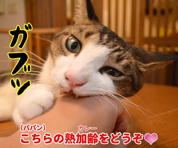 きょうはカレーの日なんだってッ 猫の写真で4コマ漫画 3コマ目ッ