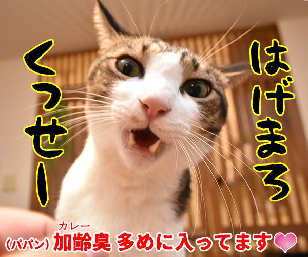 きょうはカレーの日なんだってッ 猫の写真で4コマ漫画 4コマ目ッ