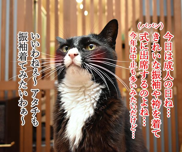 成人式には振袖が着たいのよッ 猫の写真で4コマ漫画 1コマ目ッ