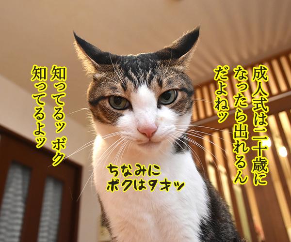 成人式には振袖が着たいのよッ 猫の写真で4コマ漫画 2コマ目ッ