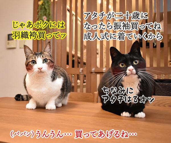 成人式には振袖が着たいのよッ 猫の写真で4コマ漫画 3コマ目ッ