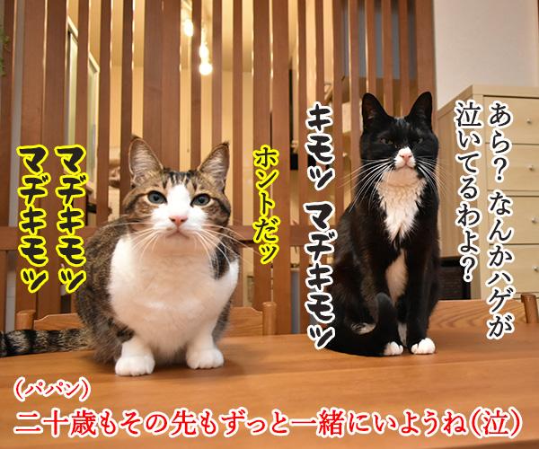 成人式には振袖が着たいのよッ 猫の写真で4コマ漫画 4コマ目ッ