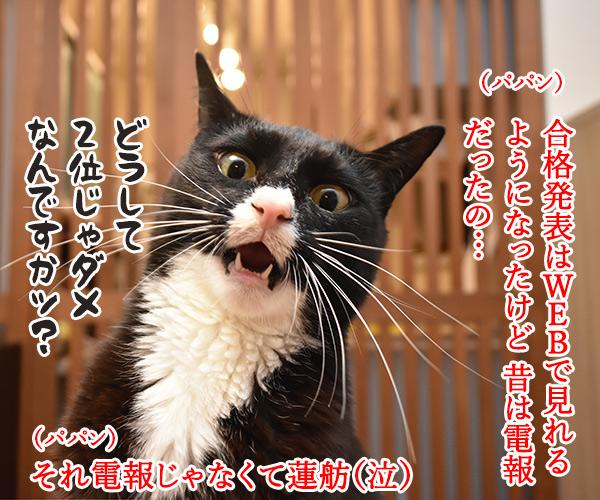受験生のみんなッ 大学入学共通テスト ガンバルのよッ 猫の写真で4コマ漫画 2コマ目ッ