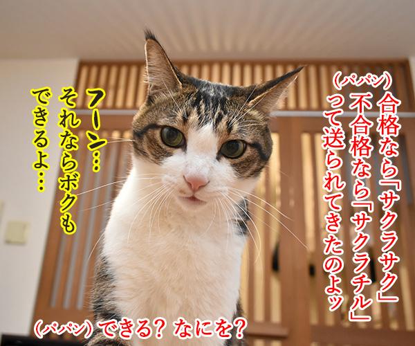 受験生のみんなッ 大学入学共通テスト ガンバルのよッ 猫の写真で4コマ漫画 3コマ目ッ