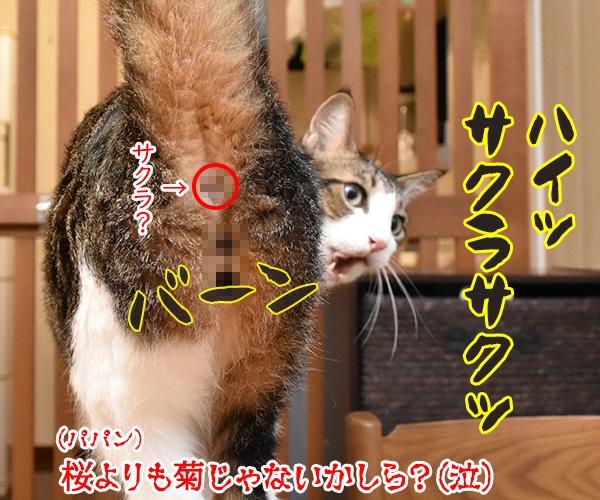 受験生のみんなッ 大学入学共通テスト ガンバルのよッ 猫の写真で4コマ漫画 4コマ目ッ