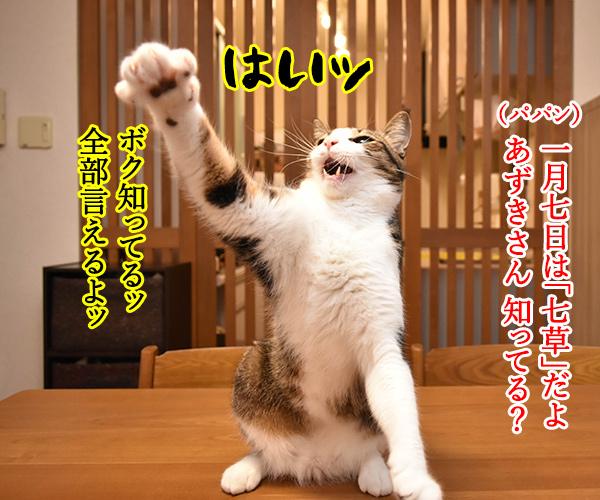 新年だからハッピーニューイヤーなのッ 猫の写真で4コマ漫画 1コマ目ッ