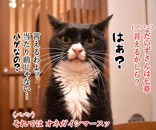 新年だからハッピーニューイヤーなのッ 猫の写真で4コマ漫画 3コマ目ッ