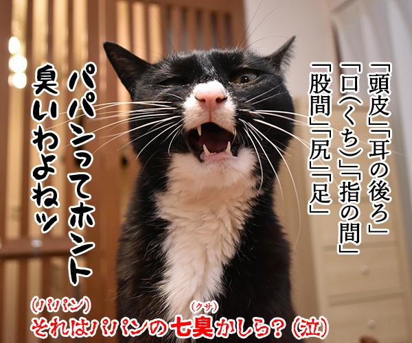 新年だからハッピーニューイヤーなのッ 猫の写真で4コマ漫画 4コマ目ッ