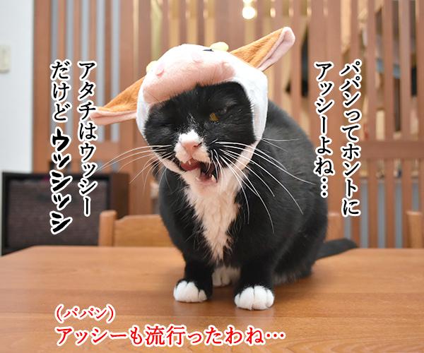 パパンはアッシーでメッシーなのッ 猫の写真で4コマ漫画 2コマ目ッ