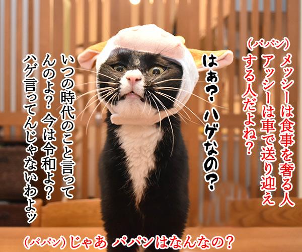 パパンはアッシーでメッシーなのッ 猫の写真で4コマ漫画 3コマ目ッ
