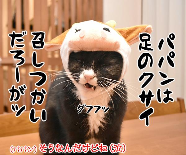 パパンはアッシーでメッシーなのッ 猫の写真で4コマ漫画 4コマ目ッ