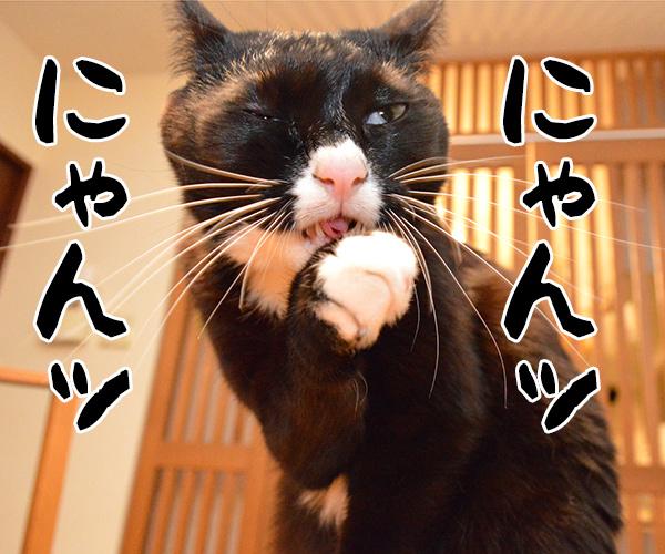 「にゃんにゃんにゃん」で猫の日なのよッ 猫の写真で4コマ漫画 1コマ目ッ