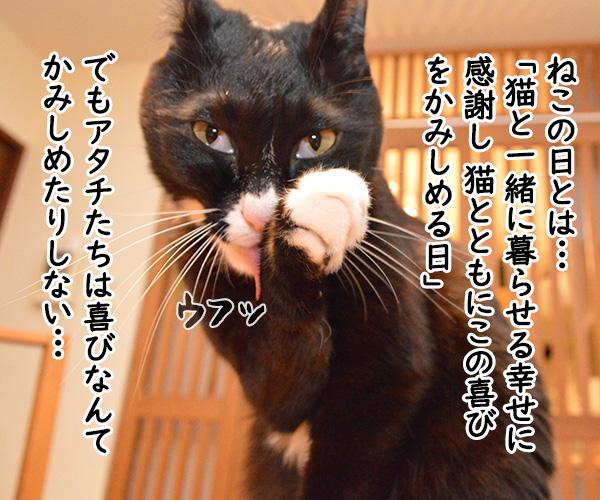 「にゃんにゃんにゃん」で猫の日なのよッ 猫の写真で4コマ漫画 3コマ目ッ