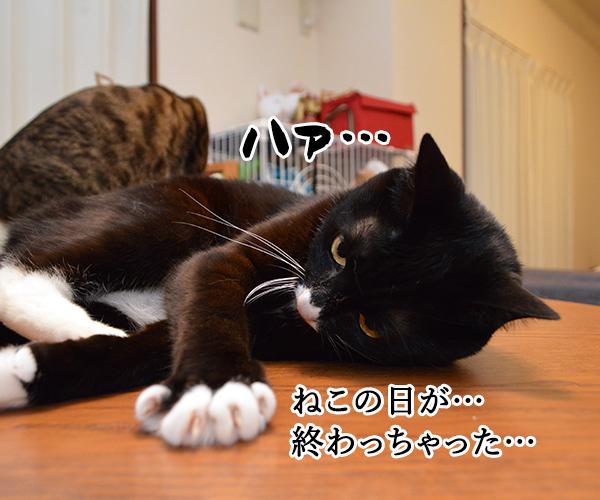 ねこの日は過ぎて… 猫の写真で4コマ漫画 1コマ目ッ