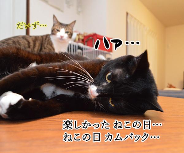 ねこの日は過ぎて… 猫の写真で4コマ漫画 2コマ目ッ
