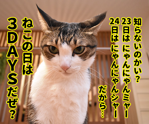 ねこの日は過ぎて… 猫の写真で4コマ漫画 3コマ目ッ