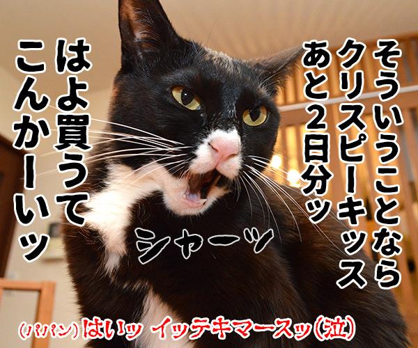 ねこの日は過ぎて… 猫の写真で4コマ漫画 4コマ目ッ