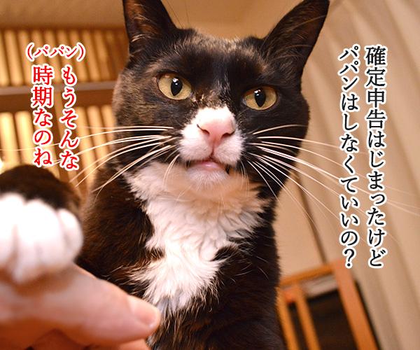 確定申告の期限が4月15日まで延長されてるのよッ 猫の写真で4コマ漫画 1コマ目ッ