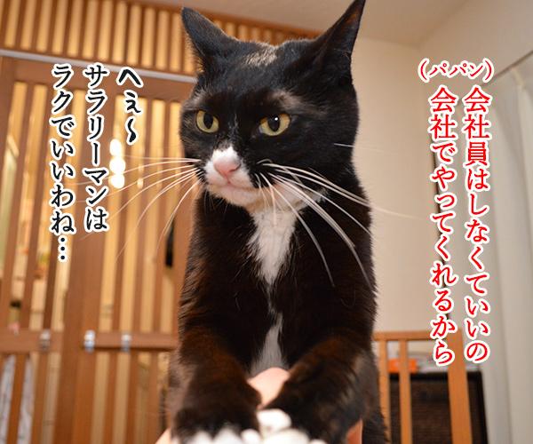確定申告の期限が4月15日まで延長されてるのよッ 猫の写真で4コマ漫画 2コマ目ッ