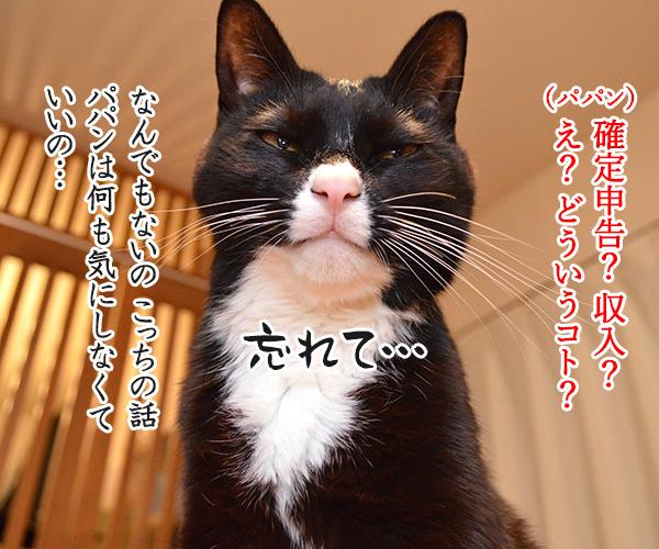 確定申告の期限が4月15日まで延長されてるのよッ 猫の写真で4コマ漫画 4コマ目ッ