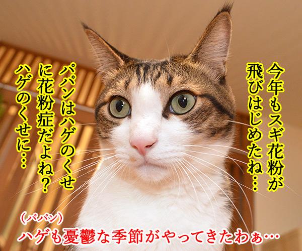 今年もスギ花粉の季節がやってきたッ 猫の写真で4コマ漫画 1コマ目ッ