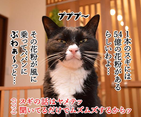 今年もスギ花粉の季節がやってきたッ 猫の写真で4コマ漫画 2コマ目ッ