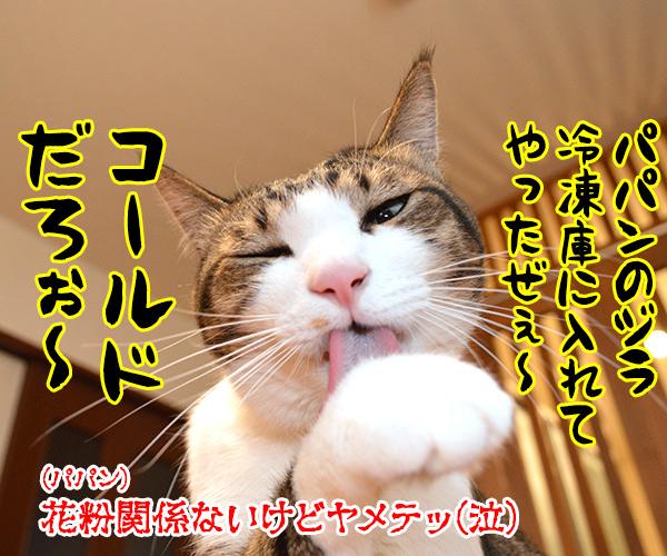 今年もスギ花粉の季節がやってきたッ 猫の写真で4コマ漫画 4コマ目ッ