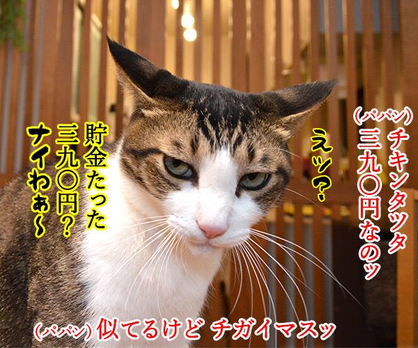 マクドナルドのチキンタツタが限定復活なのッ 猫の写真で4コマ漫画 1コマ目ッ