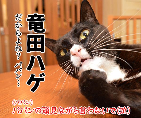 マクドナルドのチキンタツタが限定復活なのッ 猫の写真で4コマ漫画 4コマ目ッ