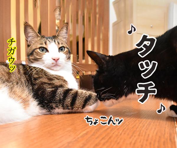 タッチ 猫の写真で4コマ漫画 2コマ目ッ