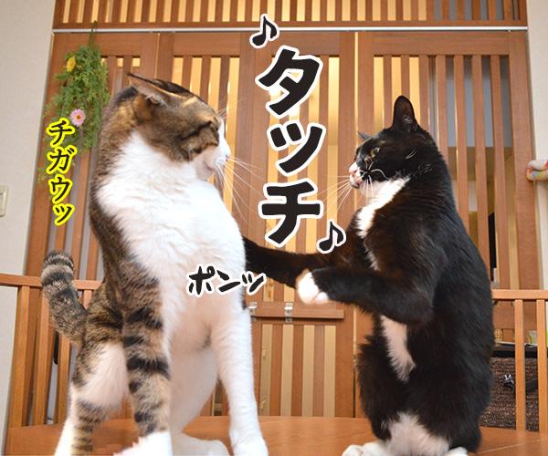 タッチ 猫の写真で4コマ漫画 3コマ目ッ