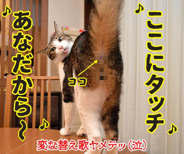 タッチ 猫の写真で4コマ漫画 4コマ目ッ