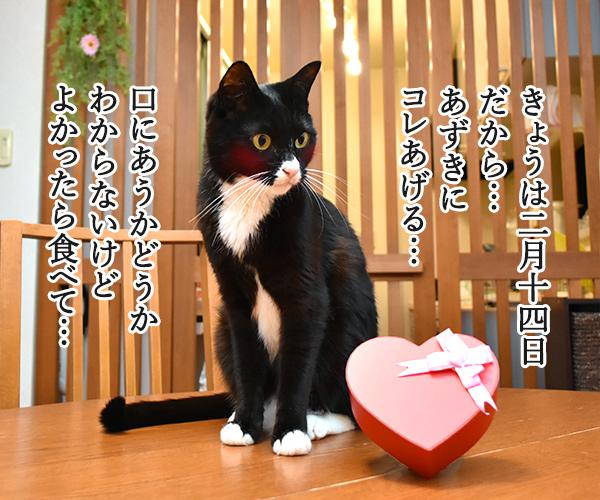 2月14日だから コレあげる♪ 猫の写真で4コマ漫画 1コマ目ッ