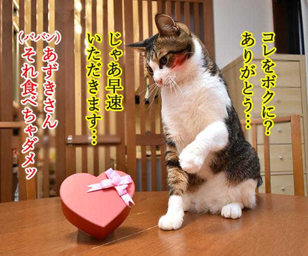2月14日だから コレあげる♪ 猫の写真で4コマ漫画 2コマ目ッ