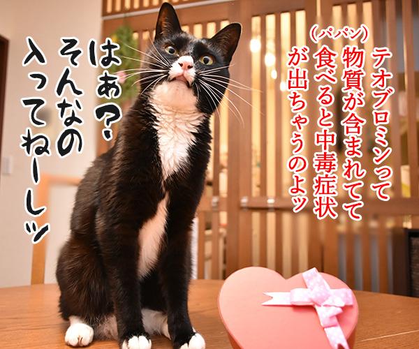 2月14日だから コレあげる♪ 猫の写真で4コマ漫画 3コマ目ッ