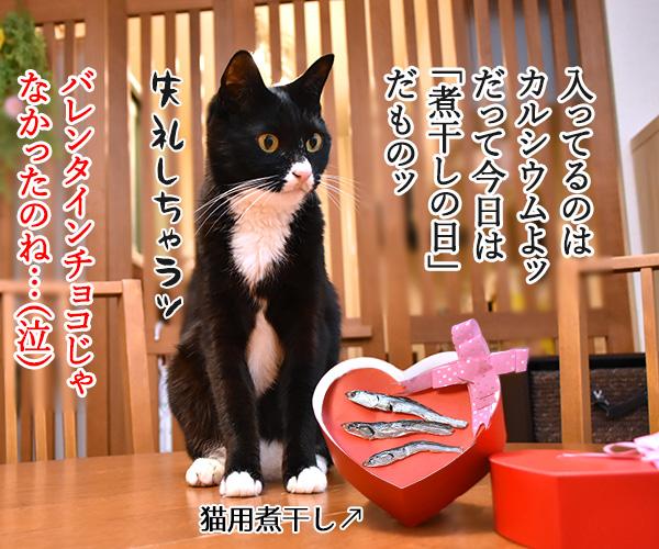 2月14日だから コレあげる♪ 猫の写真で4コマ漫画 4コマ目ッ