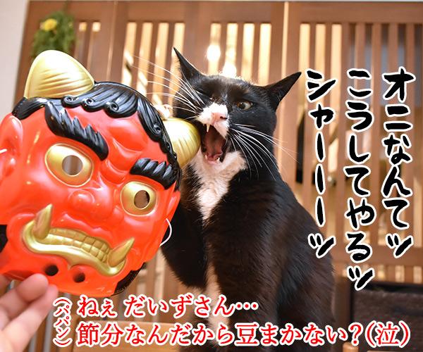 今日は節分だから歳の数だけ豆を食べるのよッ 猫の写真で4コマ漫画 1コマ目ッ