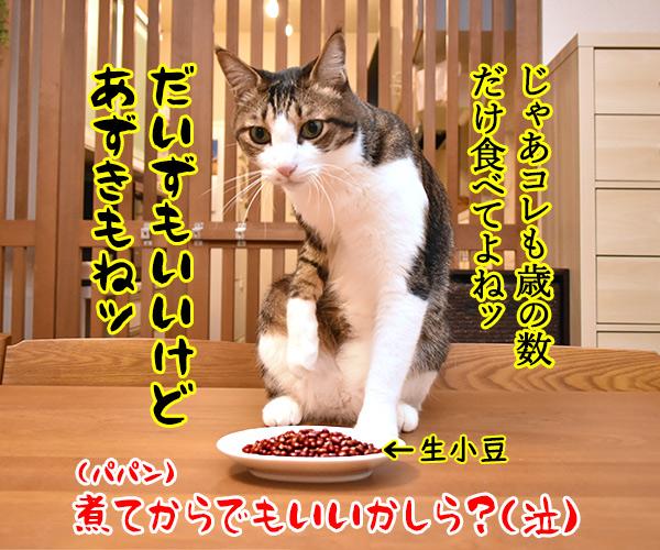 今日は節分だから歳の数だけ豆を食べるのよッ 猫の写真で4コマ漫画 4コマ目ッ