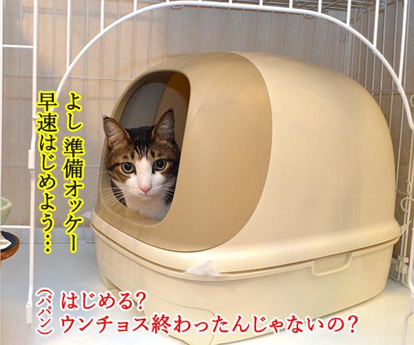 ウンチョスしたら準備オッケーなのッ 猫の写真で4コマ漫画 1コマ目ッ