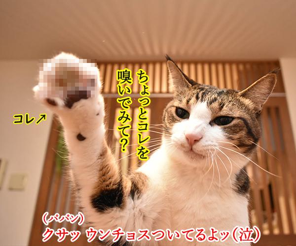 ウンチョスしたら準備オッケーなのッ 猫の写真で4コマ漫画 2コマ目ッ