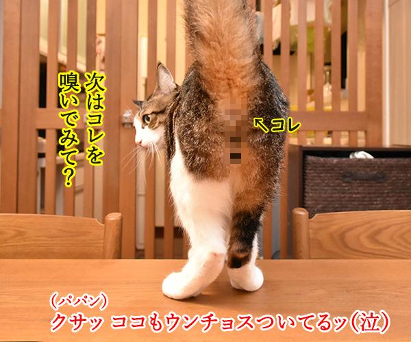 ウンチョスしたら準備オッケーなのッ 猫の写真で4コマ漫画 3コマ目ッ