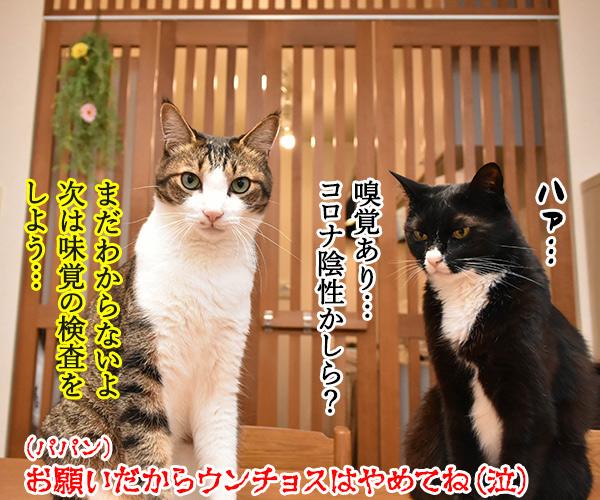 ウンチョスしたら準備オッケーなのッ 猫の写真で4コマ漫画 4コマ目ッ